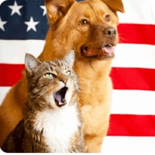 Honor your country, adopt a shelter pet