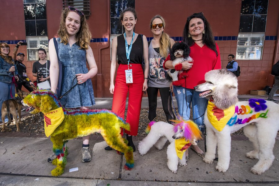 Inside the Colorful and Creative World of Competitive Dog Grooming at SXSW