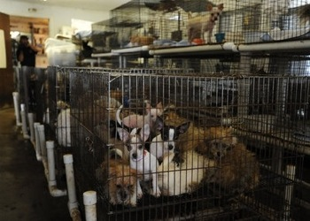 House Passes Puppy Mill Bill: With Simpson arguing against