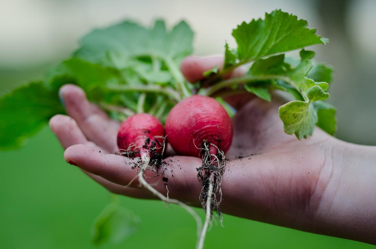 Community Gardens To Fulfill Your Secret Farmer Fantasy Local