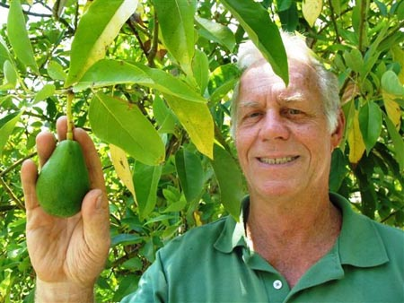 Grow Avocados In Texas Yes We Can Food The Austin