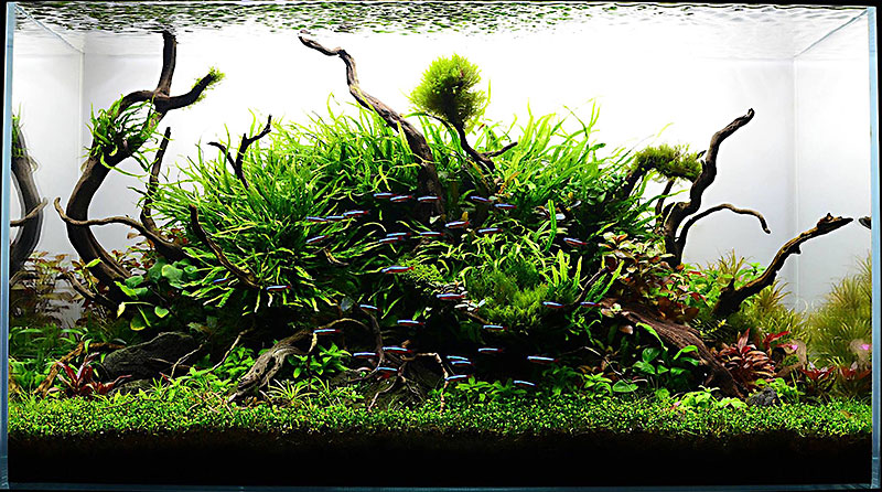Hiep Hongu0027s Award Winning Aquascapes Are Worthy Of The Greatest Tanks