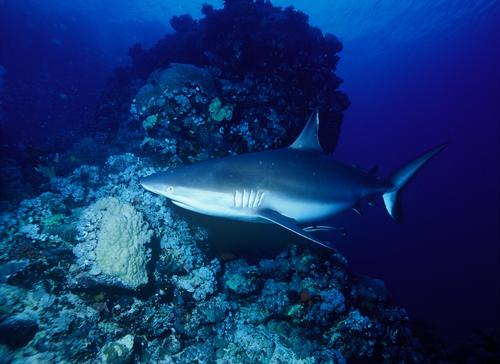 Bill of the Week: Save the Sharks