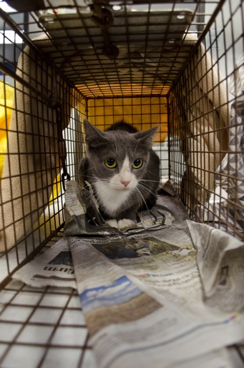 Humane Society Cat Traps