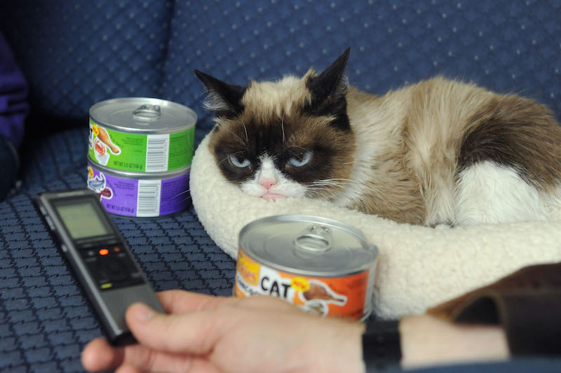 grumpy cat does not - photo #26