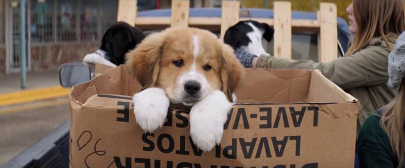 A Dog S Purpose Controversy Video