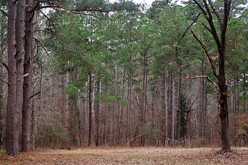 Day Trips I D Fairchild State Forest Maydelle Take A