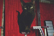 Top 10 Theatrical Sets of 2013, to a Cat