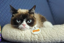 Grumpy Cat Returns to SXSW