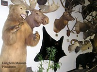 Day Trips: Taxidermy