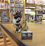 The Bookstore Cat Is Alive and Well