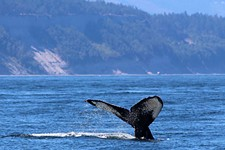 Day Trips: Whale-watching