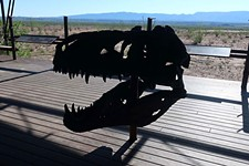 Day Trips: Big Bend Fossil Discovery Center