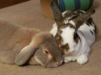 Two Warring Rabbits Defy the Odds to Love Each Other, and So Should We All