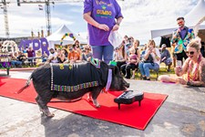 2nd Annual Pig Pageant by Central Texas Pig Rescue