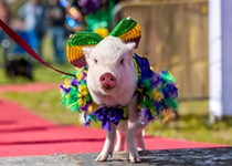 Central Texas Pig Rescue Puts on a Pig Pageant