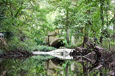 <i>Walking Waller Creek</i> Is a Tour Through Wildlife, Wild Flora, and Wild History
