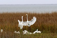 Day Trips: Galveston Island State Park