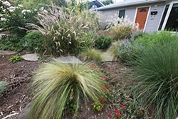This South Austin homeowner opted for native plants instead of grass of any variety.