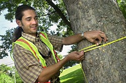 City arborist Michael Embesi sizes up a tree.