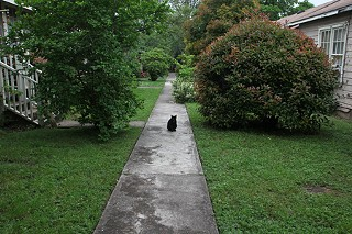 Cats historically have been part of the Wilson Street community.