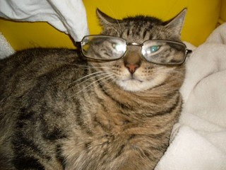 Bob's cat / Bob's glasses