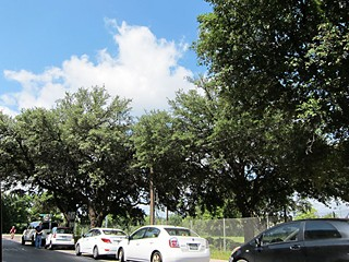 Will these trees at Cesar Chavez and San Antonio escape the axe?
