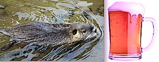 No, varmint, NO! That beer is OURS!
