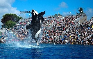 Shamu would rather go naked than wear fur.