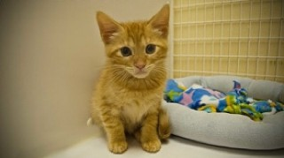 Freddie is 8 weeks old and ready to go home with you.