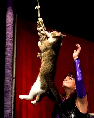 The Amazing Acro-Cats are Back in Austin this Weekend!