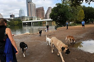 Dogs run free at Auditorium Shores.