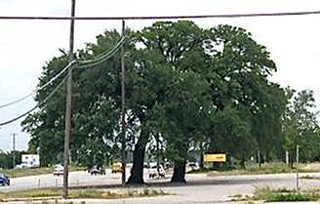 A Tollway's Toll on Trees