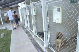 Animals await adoption and the TLAC awaits a badly needed 
