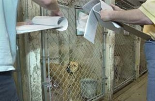 Animal Center workers select a dog to be euthanized.