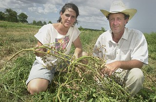 Tecolote Farm owners Katie and David Pitre survey a water-starved field.