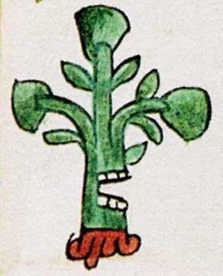 "Aztec pictogram for the town of Ahuacatlan, a ""place where there are many avocado trees"""