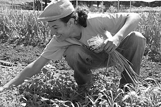 Breez Smith harvesting onions
