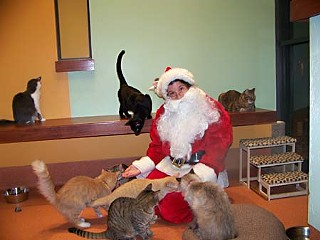 Not to be outdone by the pooches parading at City Hall, cats got all the attention at the Austin Humane Society sleepover Dec. 11.