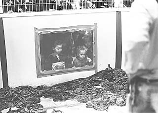 Children gaze into one of the four snake pits.
