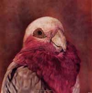 <i>Cacatua roseicapilla, Galah</i> (1997) from <i>Small Deaths</i>. You're not quite sure [if it's a painting or a photograph], Breakey says, and I actually like that realm.