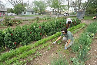 Paula Foore (front) and a volunteer weed the garden at Springdale Farm.