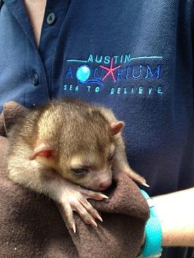 Updated Austin Aquarium Gets The Fisheye Owners