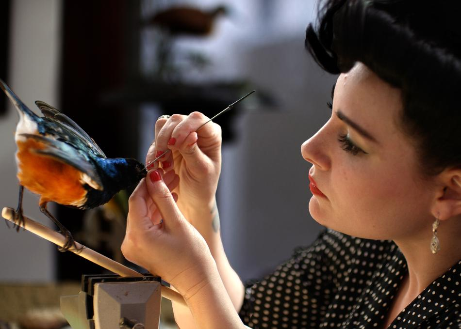 Inside the Amazing World of Taxidermy With Stuffed